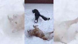 Snow angels are not just for kids, but also the dog