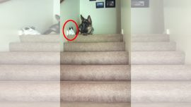 What to do when your friend is a kitten and the stairs has huge steps