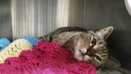 Missing California cat found in Canada years later