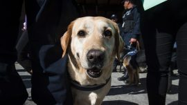 Spanish rescue dog helps rescue trapped migrant
