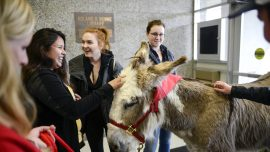 Donkey visits university, offers students stress relief