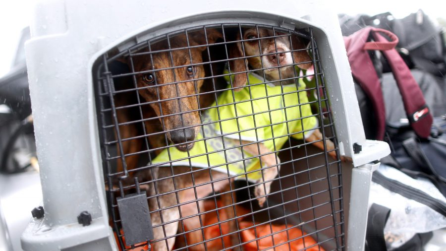 Authorities: About 200 Dogs Rescued From 'Hoarding Home'