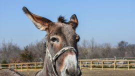 Donkeys Detained for Eating Expensive Plants