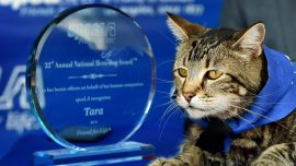 Tara the Hero Cat that Fended Off a Dog Attacking Her Owner to Ride in Rose Parade