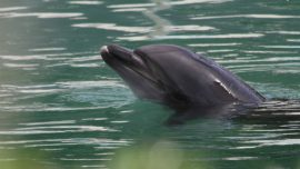 Honey the Lonely Dolphin, Left in Derelict Japanese Aquarium, Sparks Public Outcry