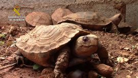 Spanish Police Shut Down 'Biggest Illegal Turtle Farm in Europe'