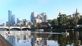 Spotted: Dolphins and Seal in Melbourne's Yarra River
