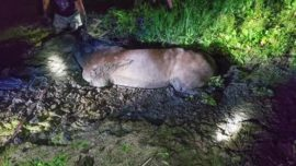 Colorado Firefighters Rescue Horse Trapped up to Its Torso in Mud