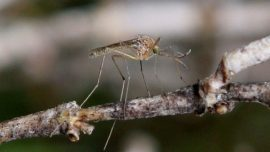 New Jersey Confirms Its Earliest Ever West Nile Virus Case
