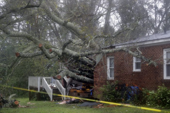 A fallen tree that damaged a house
