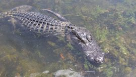 Identified: Body of Florida Teenager Surrounded by Alligators