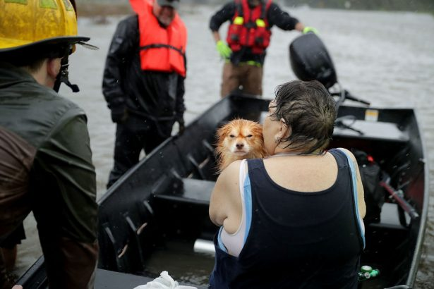 workers rescue a woman and her dog