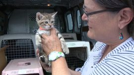 Woman Rescues Animals From Fury of Hurricane Florence