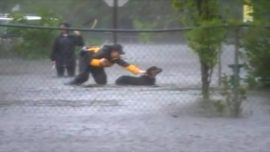 Reporter Interrupts Live Broadcast to Rescue Rottweiler From Florence Floodwaters