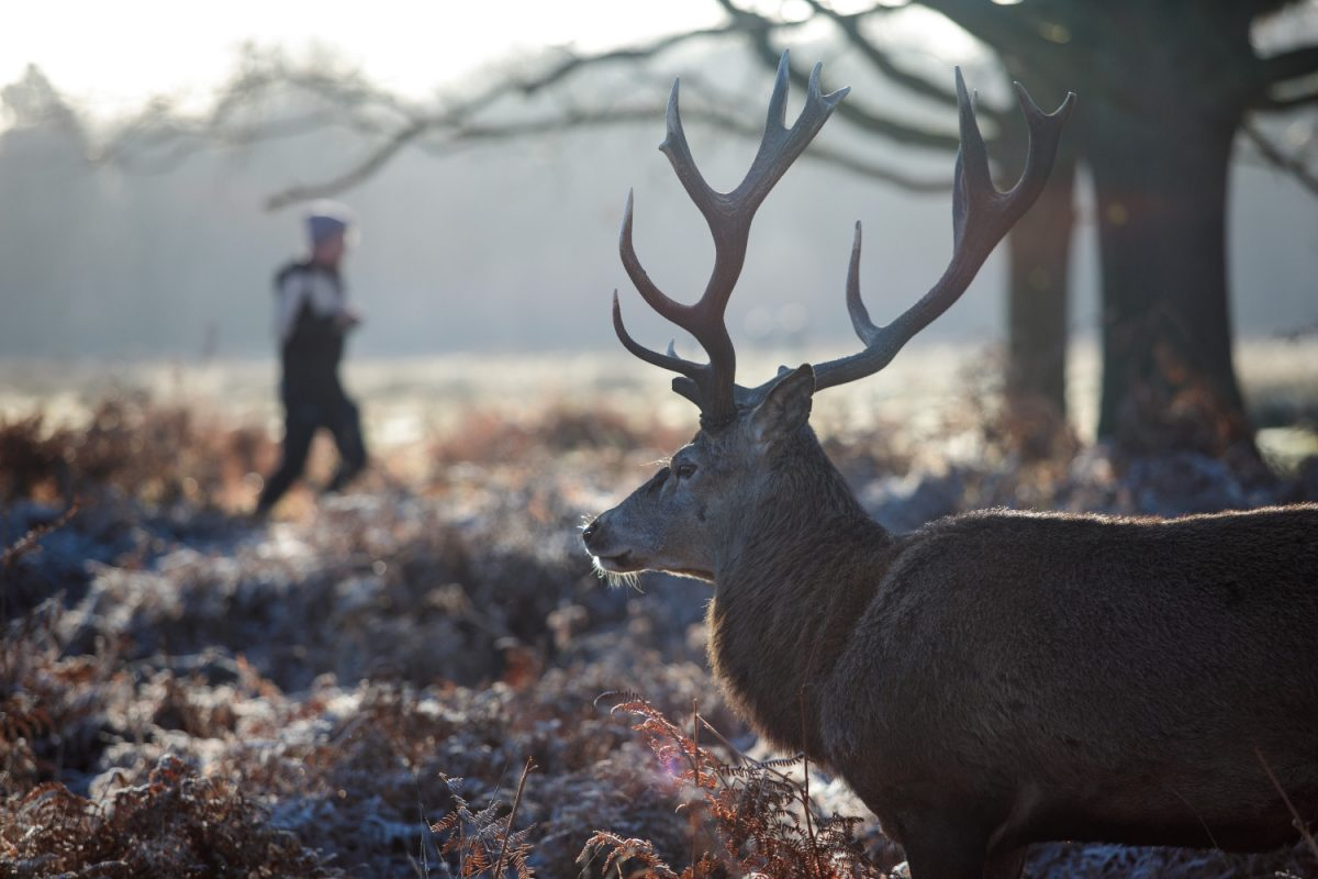 London stag
