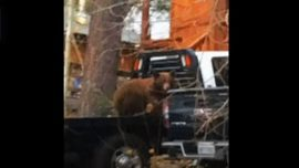 Trapped Bear Cub Rescued From Truck While Mother Bear Waits Outside