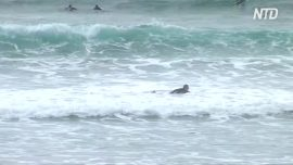 Man Survives Shark Attack at Beach in Australia by Punching It