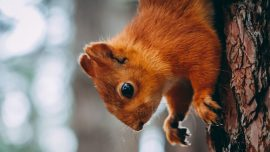 Woman Removed From Flight Over 'Emotional Support Squirrel'