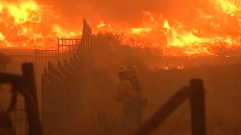 Exotic Animals Rescued From California Wildfires