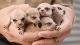 Cute Baby Animals Born at Australian Wildlife Park