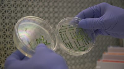 Gene-Edited Food Is Coming, but Will Shoppers Buy?
