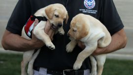 TSA Moves to Floppy Eared Dogs to Have Friendlier Presence
