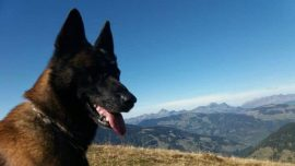 Dog Rescues Boy, 12, Buried by Avalanche for an Hour