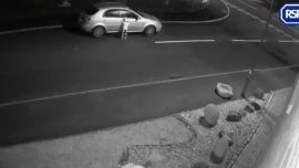 Video Shows Dog Being Abandoned on Side of Road 'At Christmas'