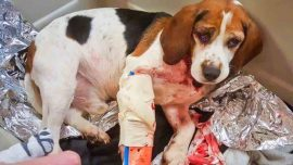 Truck Driver Saves Two Dogs Thrown out of a Moving Car in New York