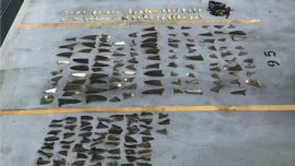 Japanese Boat Owners Charged With Helping Smuggle Shark Fins