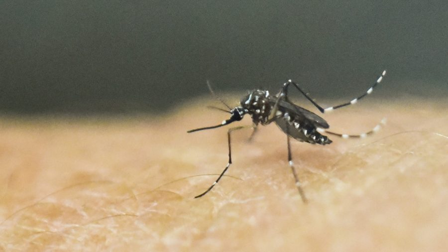 Deadly mosquito-borne brain swelling virus detected in Florida""