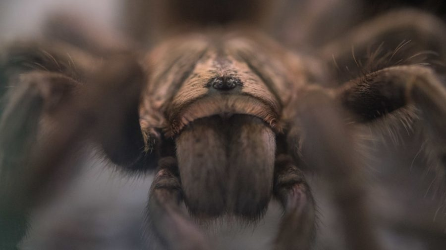 'Why Don't You Die?': Australian's Fight With a Spider Sparks Police Call