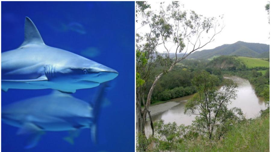 Australian Fisherman Captures Five Sharks Just 100 Meters From Swimming Children