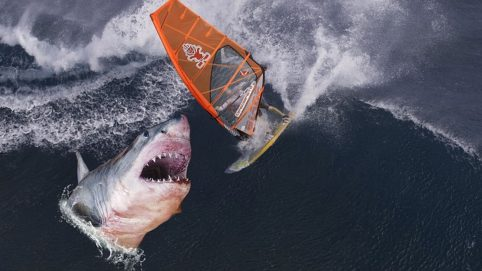 Inches Away From Being Devoured, Photographer Captures Frightening Pictures of Great White Shark