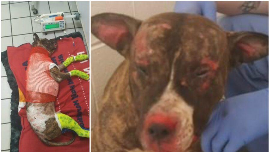 Virginia Animal Shelter Seeks Suspect After Dog Set on Fire
