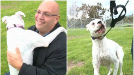 Rescued Dog Saves His Owner From a Heart Attack