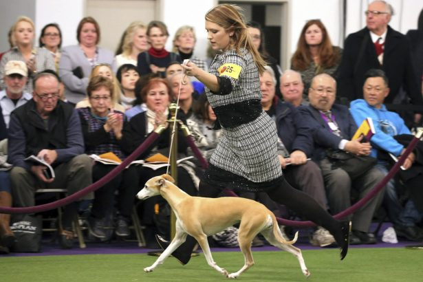 Cheslie Pickett Smithey, runs with her Whippet named Bourbon