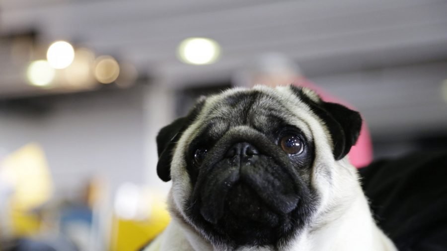 Town Seizes Dog Over Unpaid Taxes, Sells It on Ebay, Now Faces Lawsuit