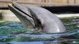 Over 200 Dead Dolphins Were Found From Louisiana to Florida. That's Triple the Usual Number, NOAA Says