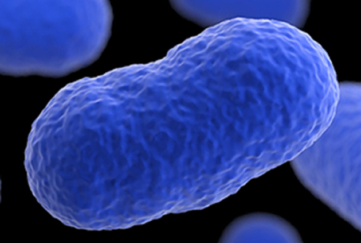 listeria outbreak kills 3