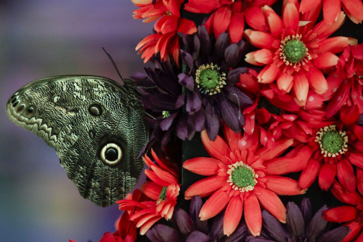"Flower arrangement at ""Flower Power"""