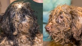 Rescuers Help Save 630 Dogs, 'Heavily Matted and Covered in Feces' From a Puppy Mill