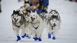 Image Issues Hound Start of Alaska's Iditarod Sled Dog Race