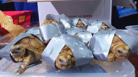 Men Charged for Poaching Thousands of Turtles