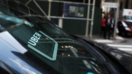 Drunk Utah Man Calls Uber to Take Abandoned Baby Bird to Rescue Facility