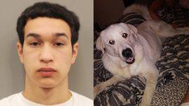 Hero Dog Dies After Attacking Gunman, Protecting His Family During Shooting at Birthday Party