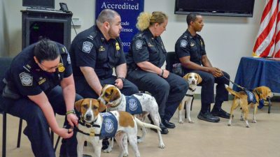 A Brigade of Beagles Helps the US Save Billions at America's Busiest Airports