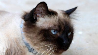 cats | NTD News