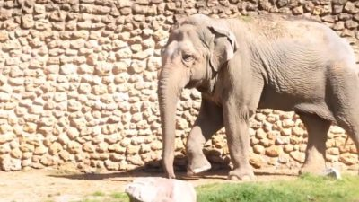 World's 'Saddest' Elephant Dies In Solitary Confinement at Spanish Zoo
