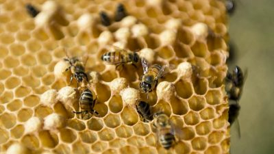 180,000 Bees in Rooftop Beehives Survive Notre Dame Inferno